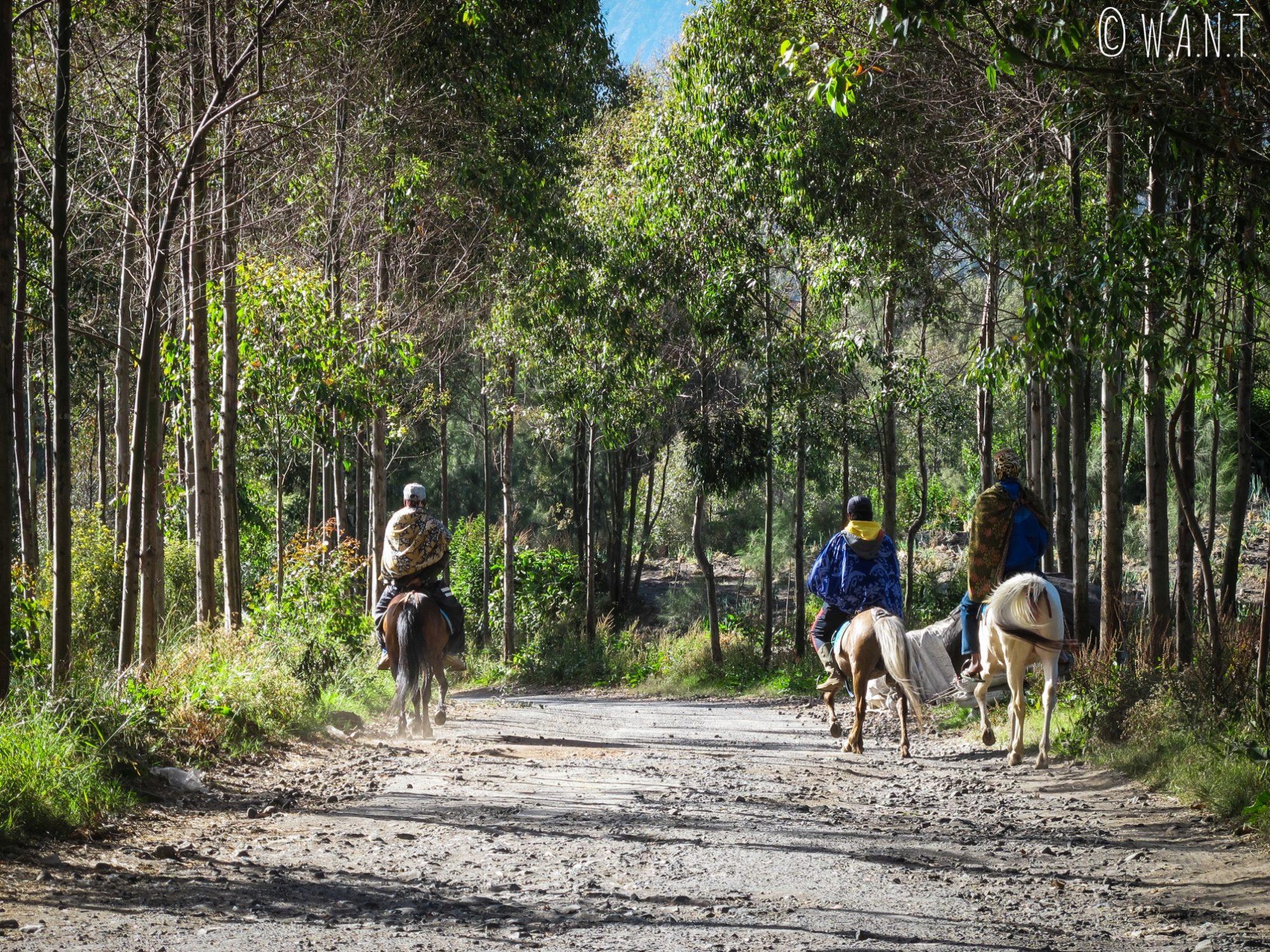 Les visiteurs peuvent monter à cheval pour se rendre au point de vue de Seruni à Cemoro Lawang