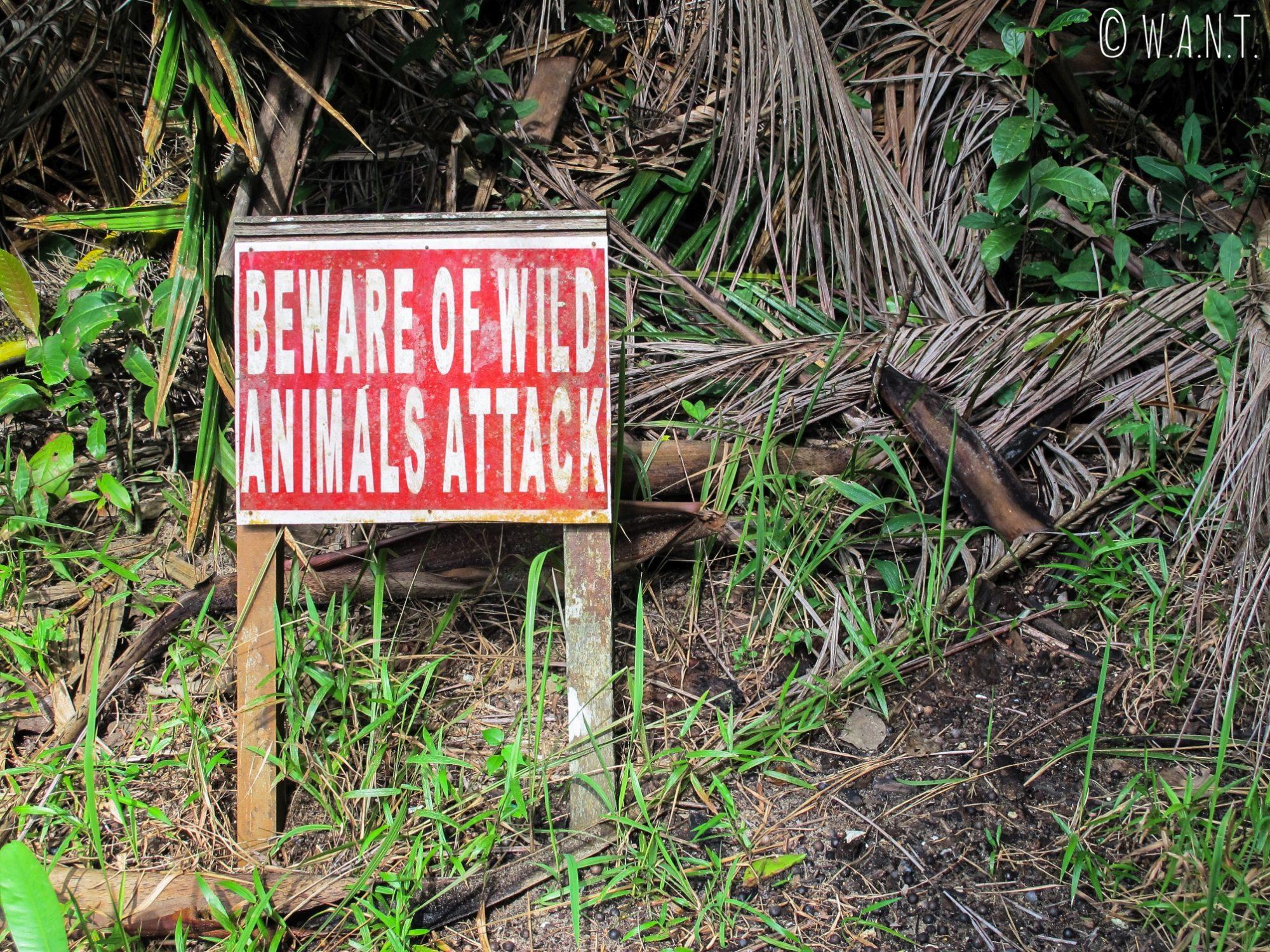 Attention aux animaux sauvages dans le Bako National Park