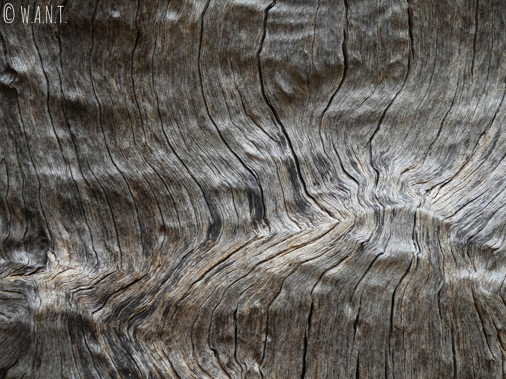 Gros plan sur une écorce d'arbre dans le parc national Uluru-Kata Tjuta