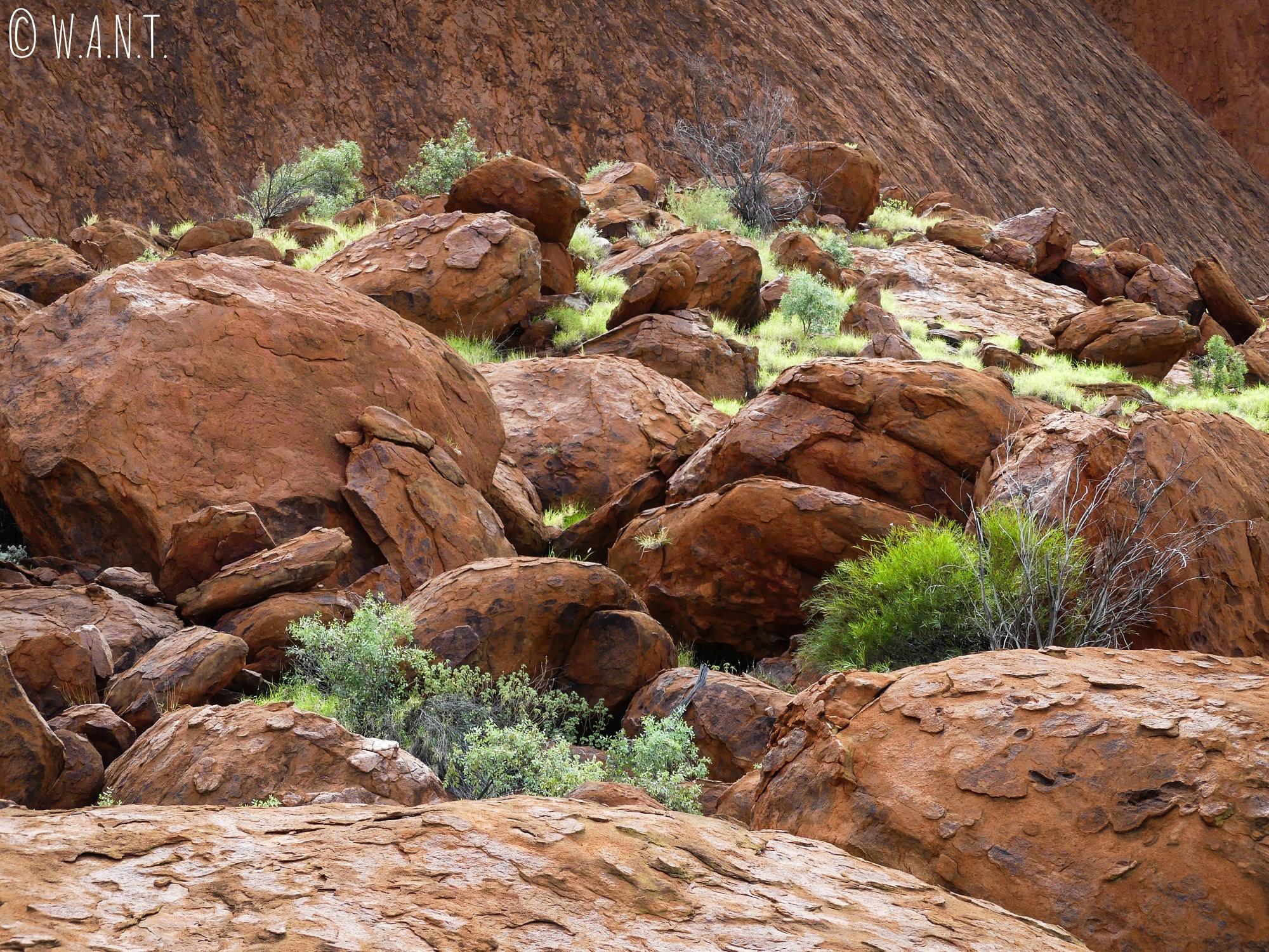 Roches au pied d'Uluru-Ayers Rock