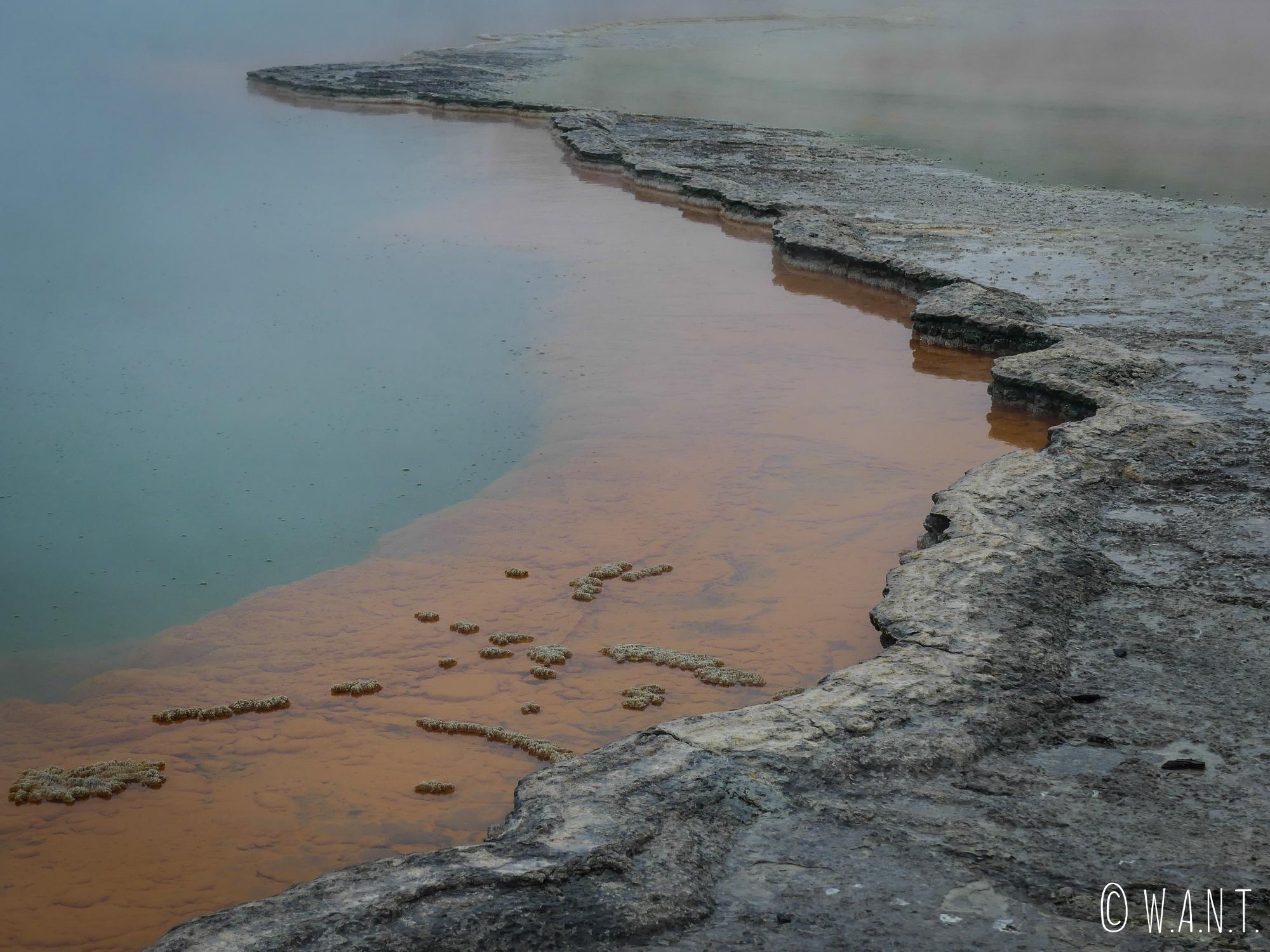 Gros plan sur la Champagne Pool du site de Wai-O-Tapu en Nouvelle-Zélande