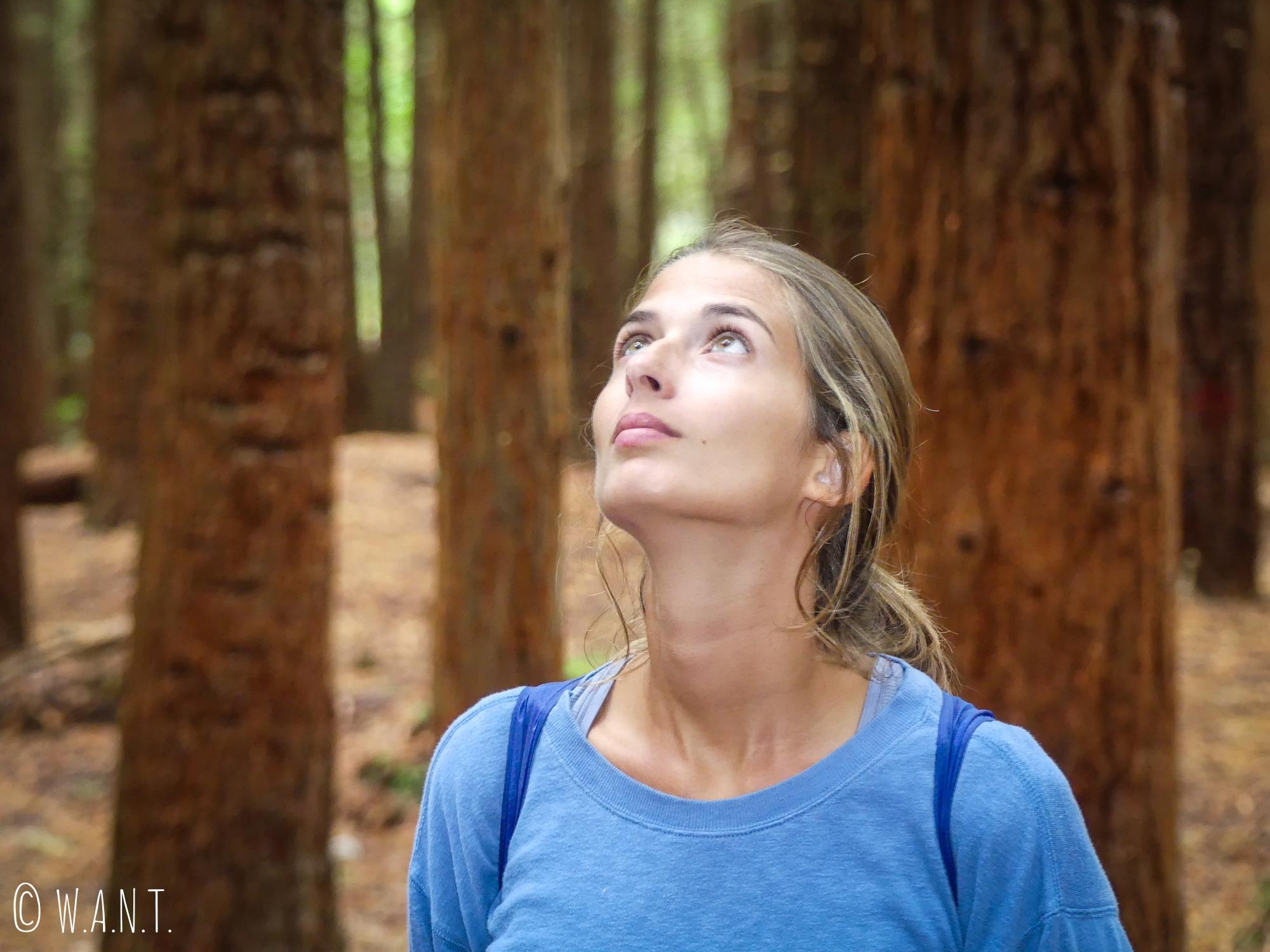 Marion contemplant la canopée de la Redwoods Forest, près de Rotorua en Nouvelle-Zélande
