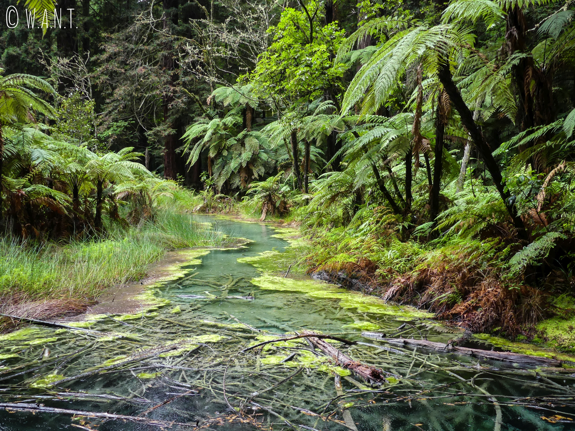 Paysage lors de notre randonnée dans la Redwoods Forest, près de Rotorua en Nouvelle-Zélande