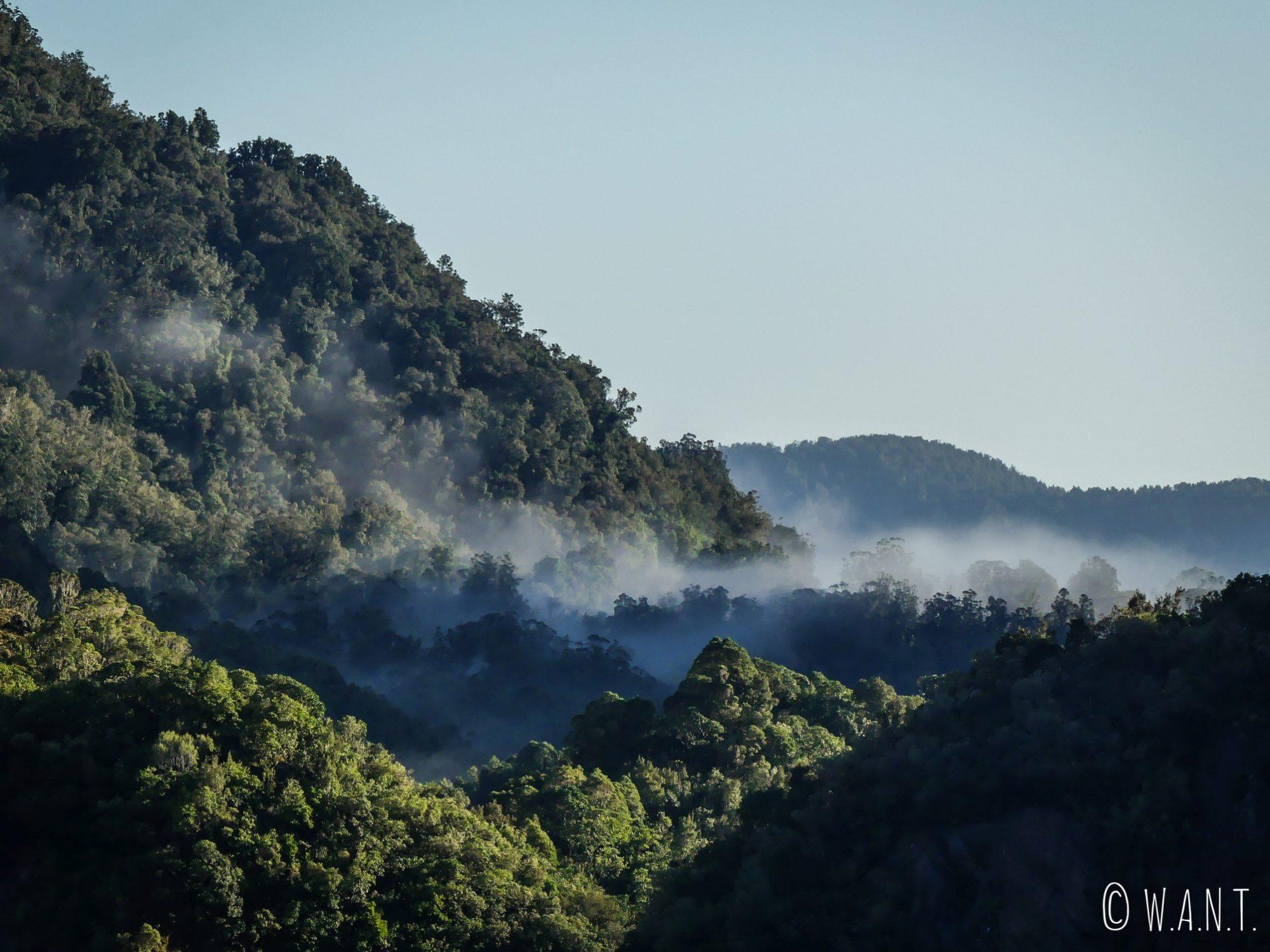 Brume sur la forêt durant notre randonnée matinale au Franz Joseph Glacier en Nouvelle-Zélande