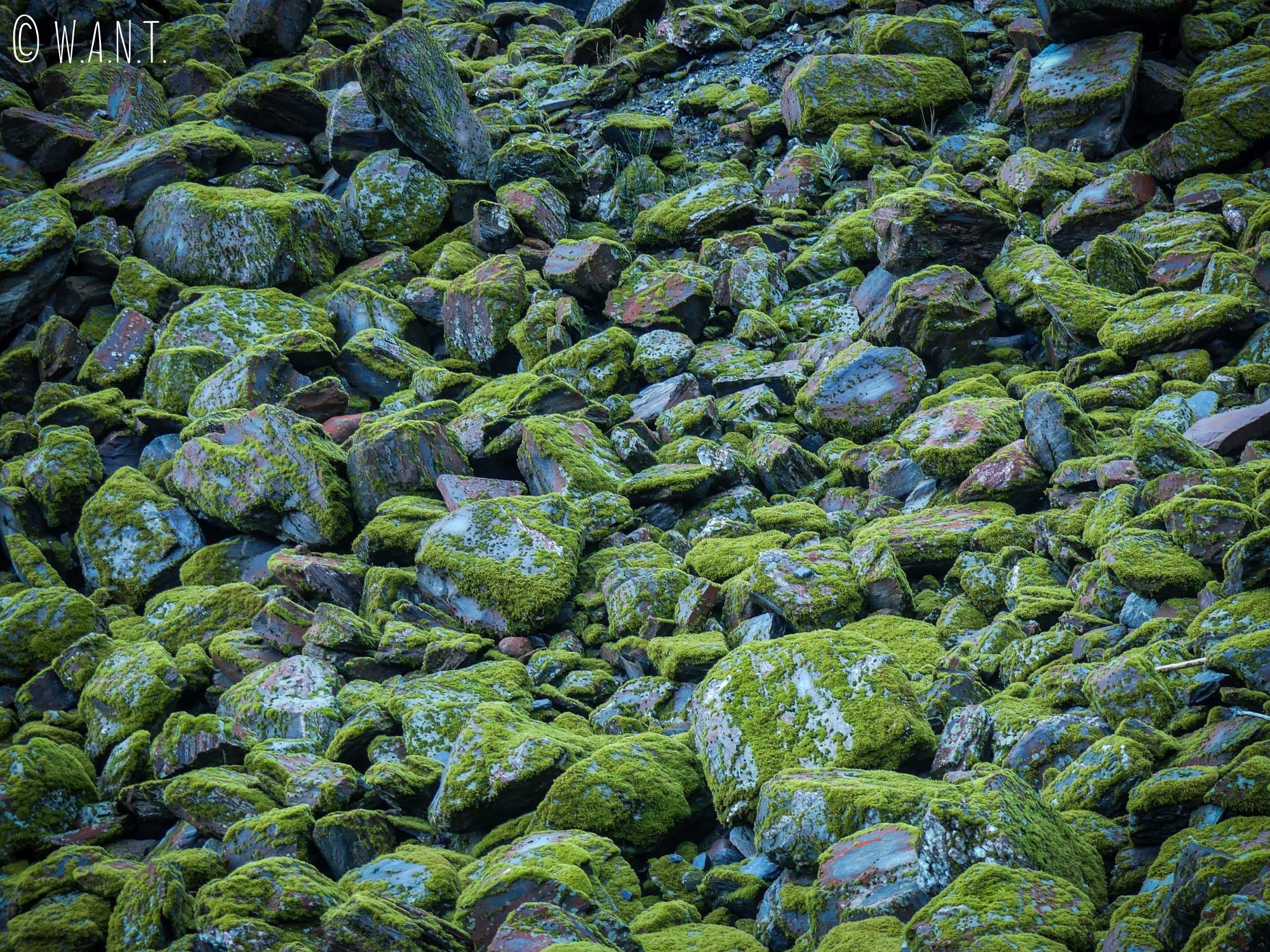 Gros plan sur les pierres présentes dans le cirque menant au Franz Joseph Glacier en Nouvelle-Zélande