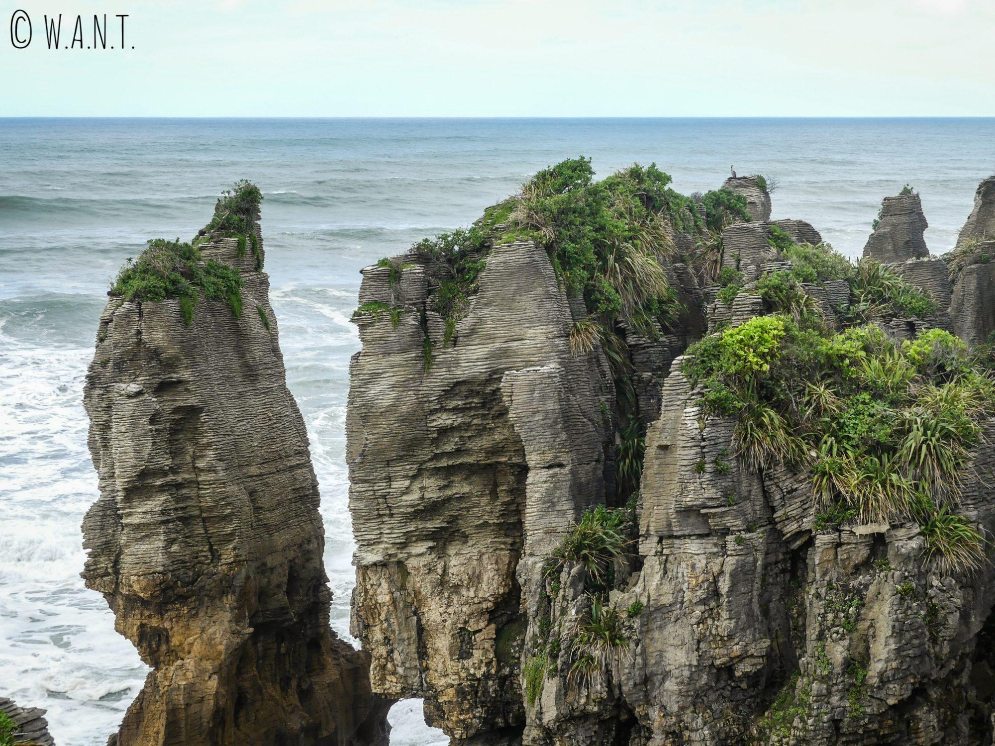 La végétation reprend ses droits sur les Pancake Rocks en Nouvelle-Zélande
