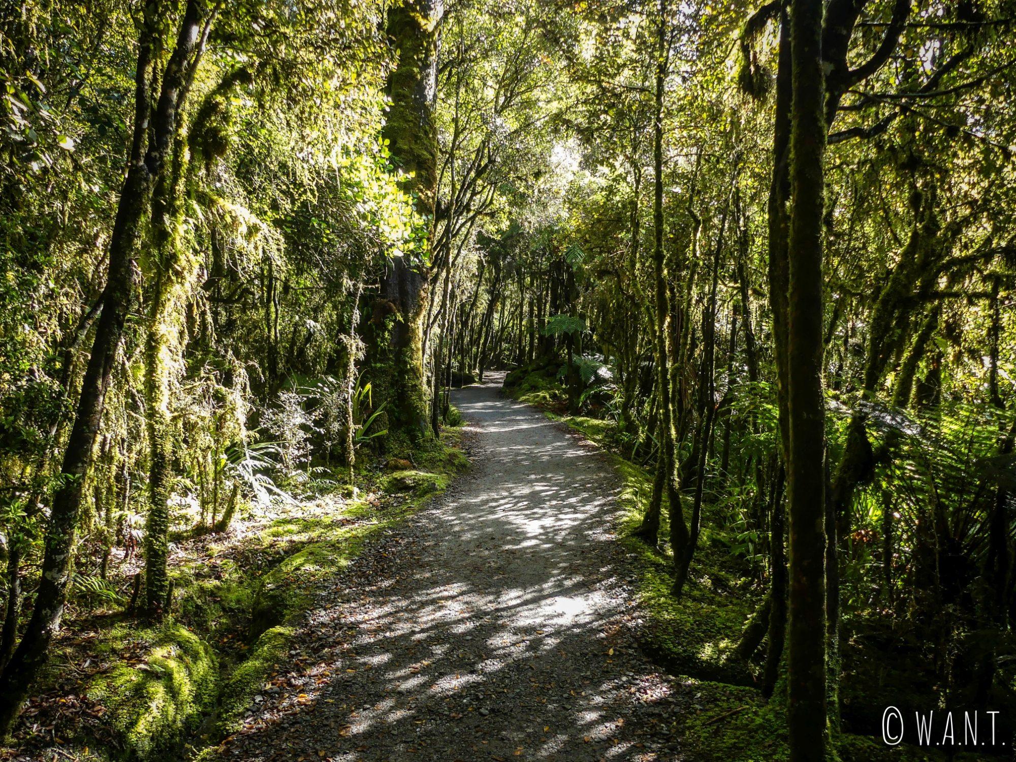 Randonnée à travers la végétation dense du lac Matheson en Nouvelle-Zélande
