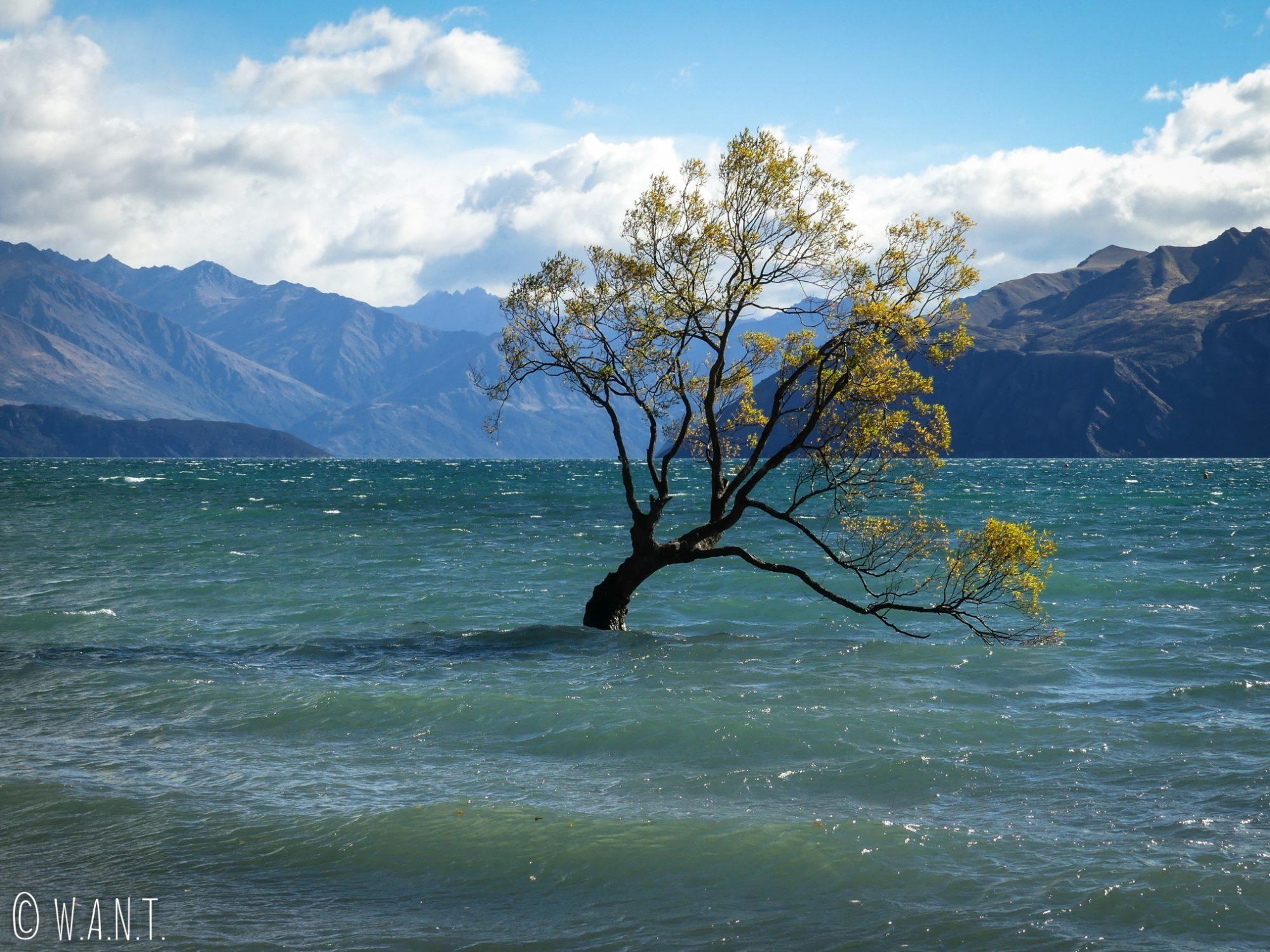 Plus célèbre arbre de Wanaka en Nouvelle-Zélande