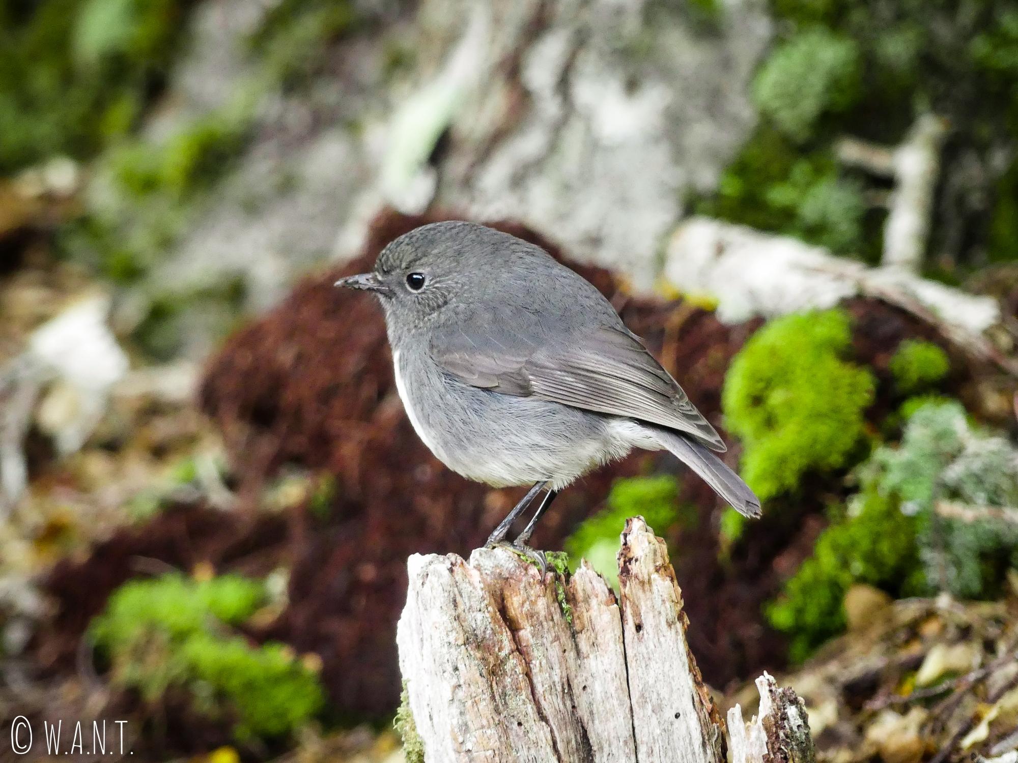 Benjamin rêve d'apprivoiser les petits oiseaux que nous rencontrons à Te Anau en Nouvelle-Zélande