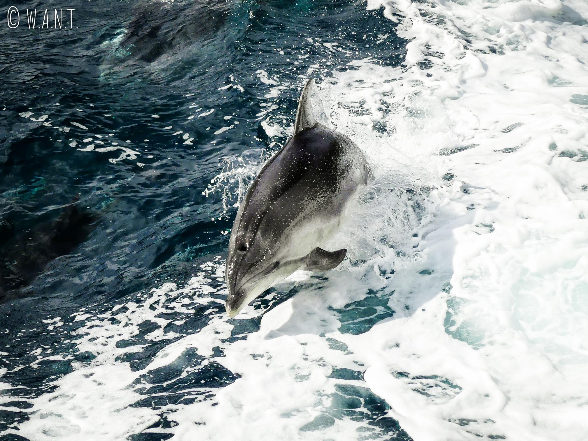 Magnifique recontre durant notre croisière sur le Milford Sound en Nouvelle-Zélande