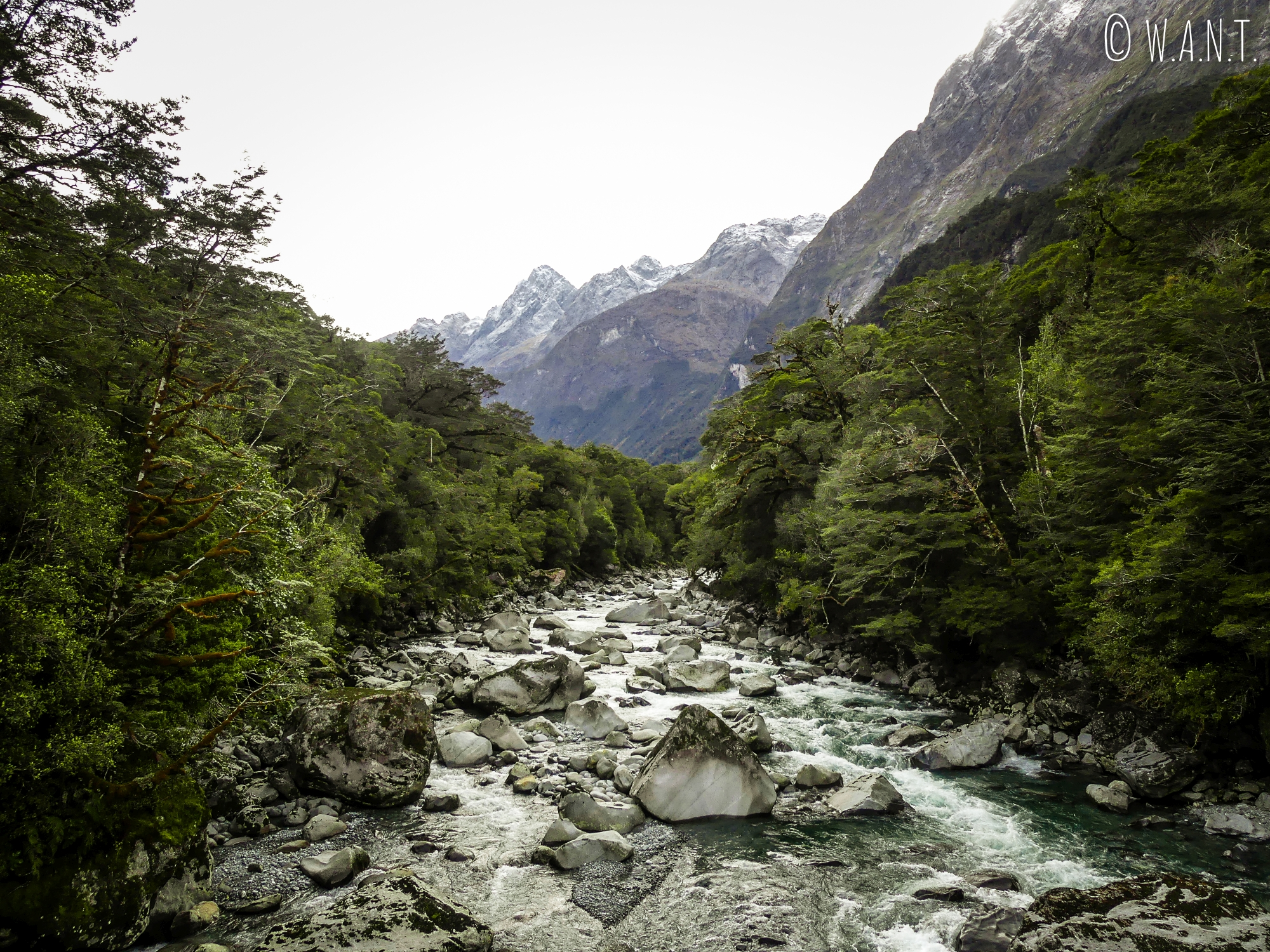 Nous nous arrêtons de nombreuses fois sur la Hollyford Road pour observer le paysage en Nouvelle-Zélande